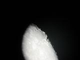 Mondaufnahme mit SkyWatcher Skymax-150 Pro Maksutov Teleskop und Digiklemme