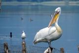 Vogel Aufnahmen mit TS Photoline 90mm f6,6 Triplet FPL-53 SuperApo TSAPO906